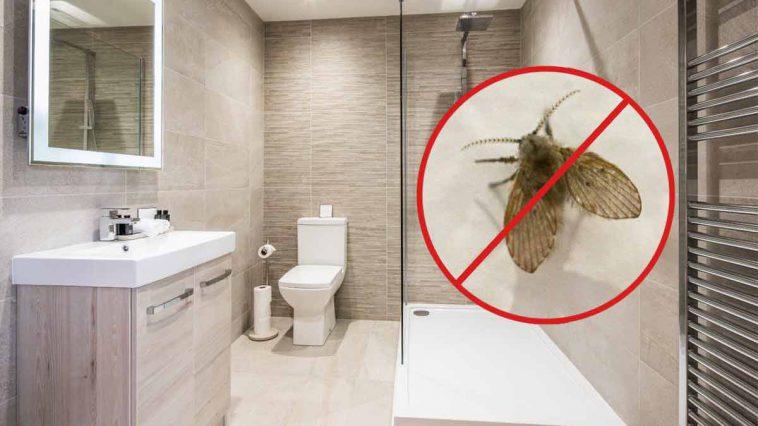 9 astuces efficaces pour se débarrasser définitivement des moucherons de sa salle de bains