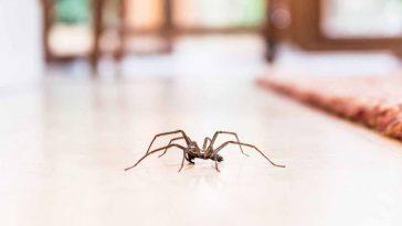 Araignées : lheure exacte à laquelle elles sortent de leurs cachettes et rentrent chez vous !