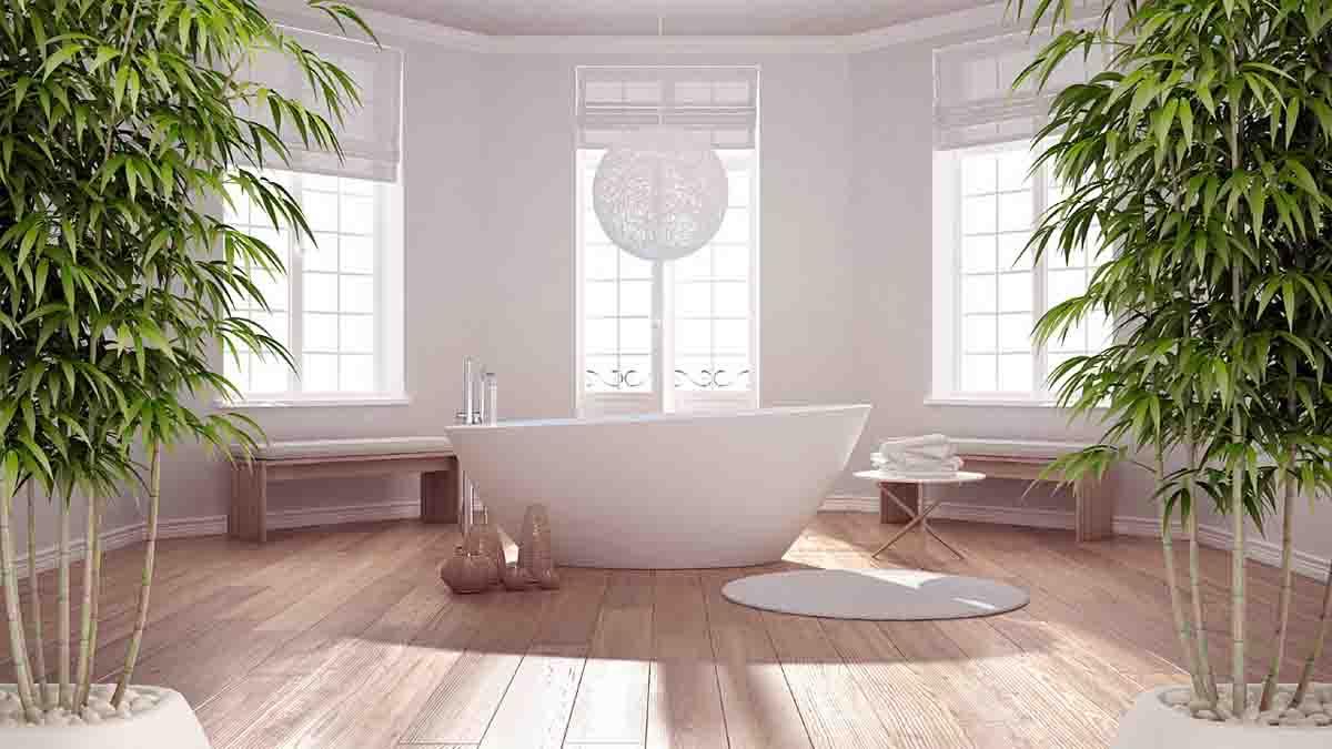 Quelle est la plante idéale pour votre salle de bains ?
