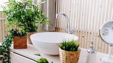 Quelle plante pour votre salle de bains ?