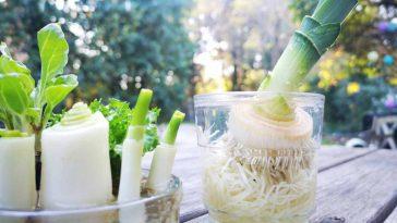 Voici 5 légumes quon peut cultiver à la maison sans terre